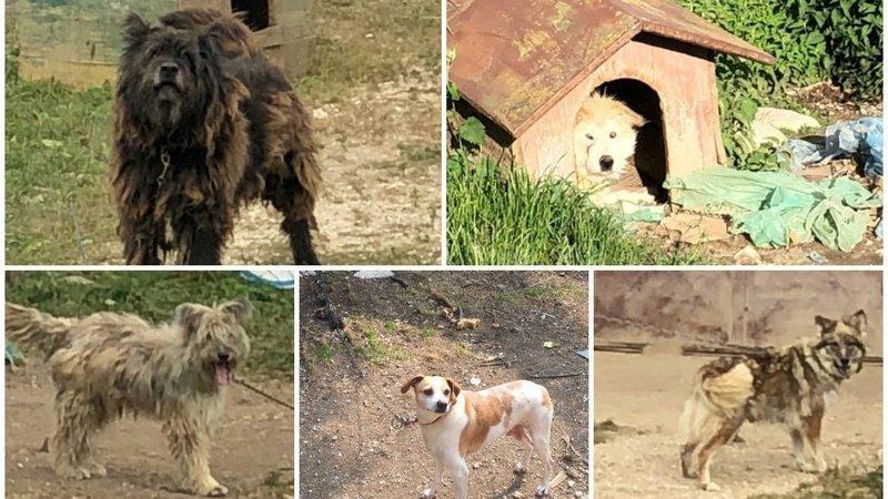Petizione Cani a Catena